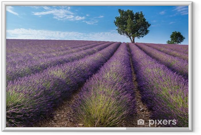 Ingelijste Poster Lavendel veld in Valensole plateau, Provence (Frankrijk) - Landschappen