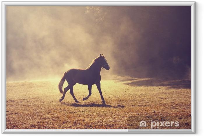 Ingelijste Poster Mooie ochtend zonlicht mistige weide met binnenlands bruin paard. - Dieren