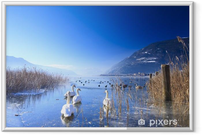 Ingelijste Poster Bevroren meer in de Alpen met zwanen en eenden op het ijs in de winter - Zwanen