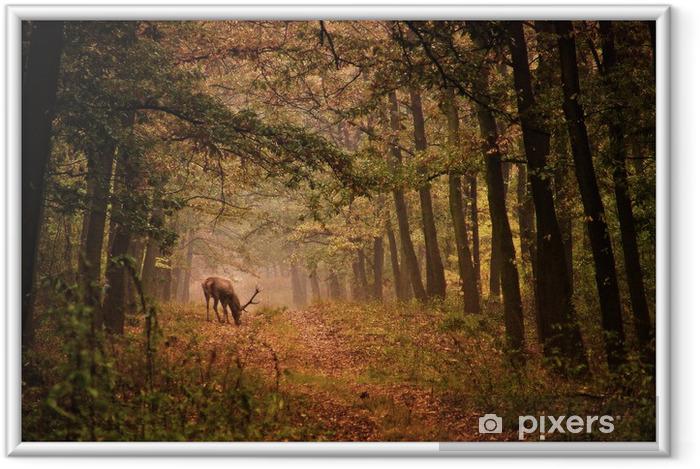 Ingelijste Poster Edelherten in een bos - Thema's