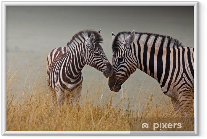 Plakat w ramie Zebry - matka i syn - Tematy