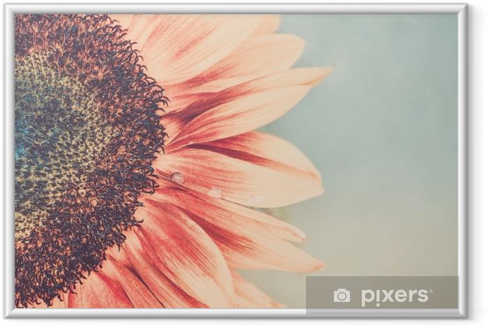 Poster en cadre Coup de macro de floraison tournesol - Plantes et fleurs