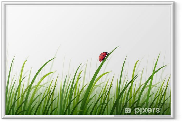 Poster en cadre Coccinelle dans l'herbe, vecteur, fond de page -