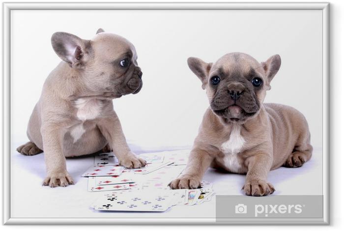 Plakat w ramie Buldog francuski szczenięta i karty poker - Buldogi francuskie