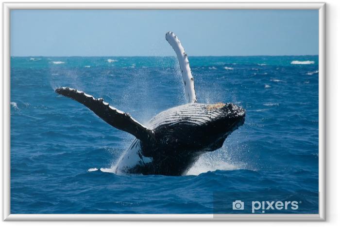 Granville valas 2 Kehystetty juliste - Merenelävät