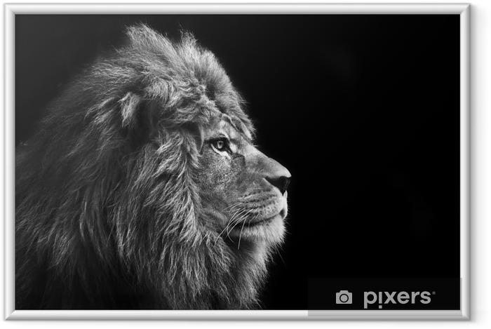 Plakat w ramie Oszałamiająca twarzy Portret mężczyzny lwa na czarnym tle w bla - Style