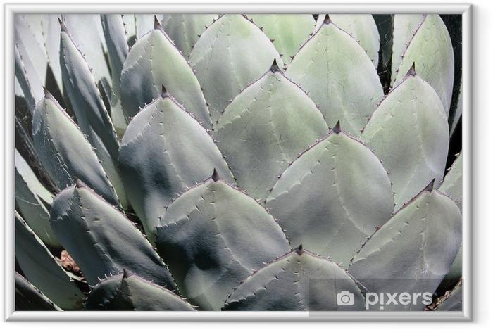 Poster i Ram Kaktus - Texturer och mönster