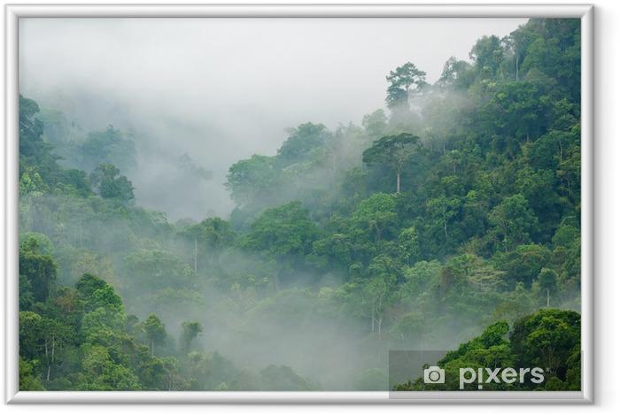 Poster en cadre Brume matinale dans la forêt tropicale - Thèmes