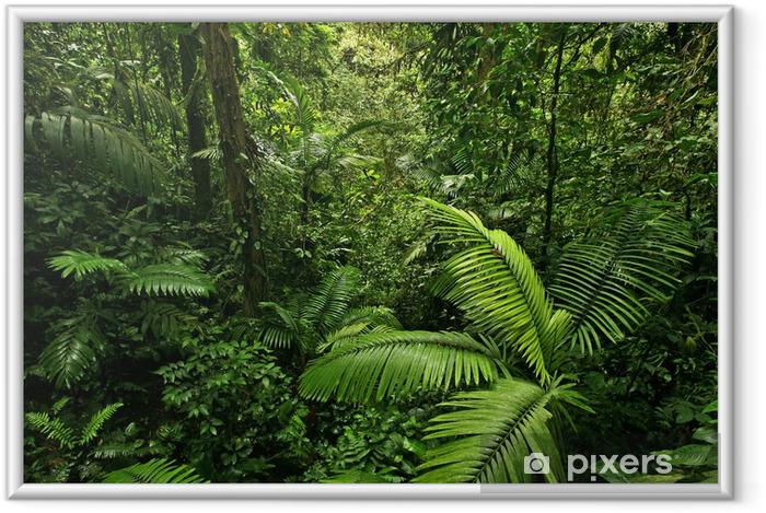 Ingelijste Poster Dichte Tropisch Regenwoud - Bestemmingen