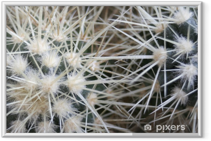 Poster i Ram Kaktus - Växter