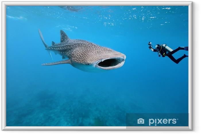 Valaanhuna ja vedenalainen valokuvaaja Kehystetty juliste - Sharks
