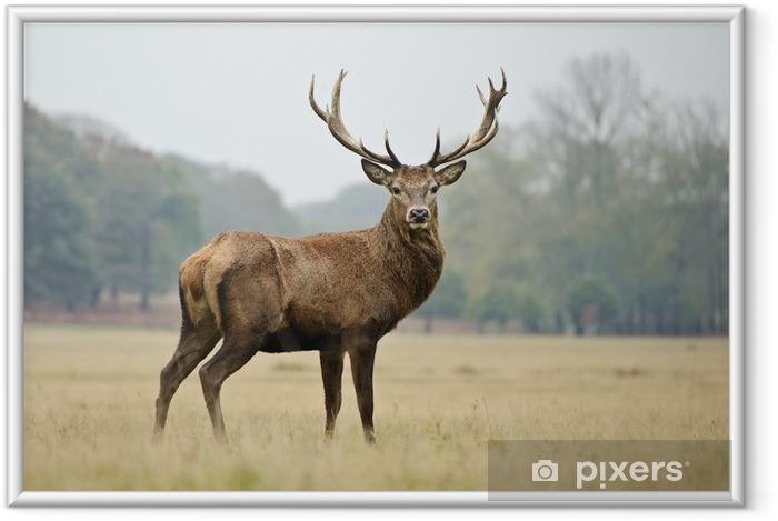 Plakat w ramie Portret majestatycznym jelenia jelenia w jesień - Style