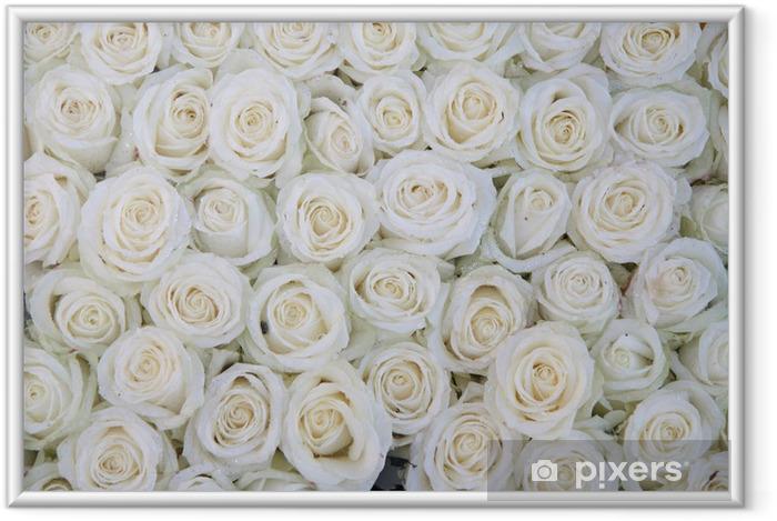 Poster en cadre Groupe de roses blanches après une averse de pluie - Thèmes