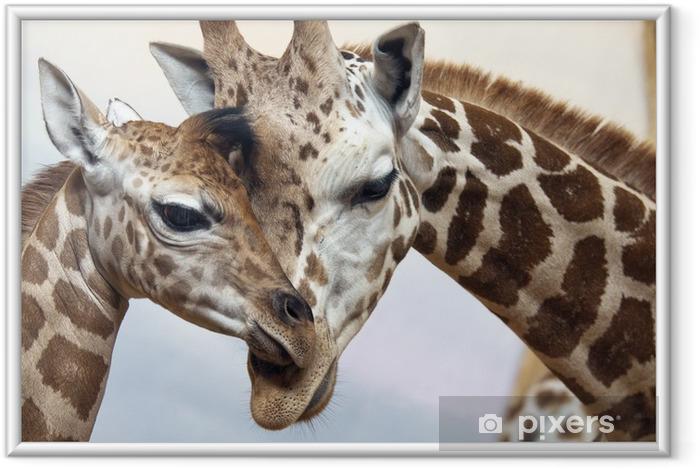 Ingelijste Poster Giraffen - Thema's