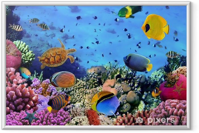 Póster Enmarcado Foto de una colonia de coral -