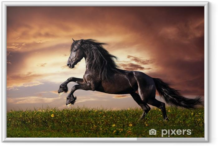 Innrammet plakat Svart Friesian hest galopp -