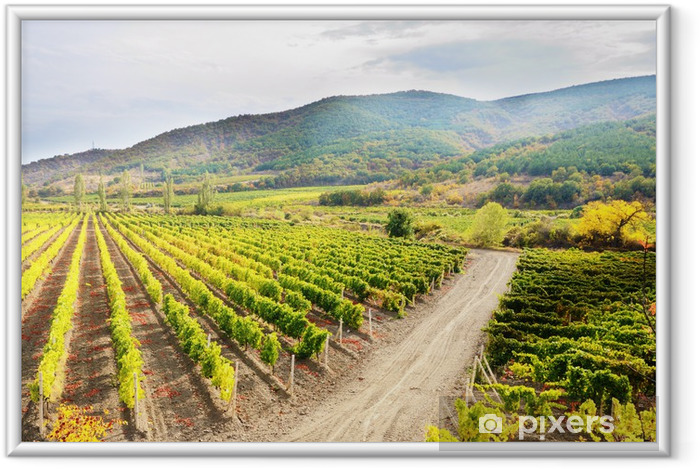 Ingelijste Poster Vineyards - Landbouw