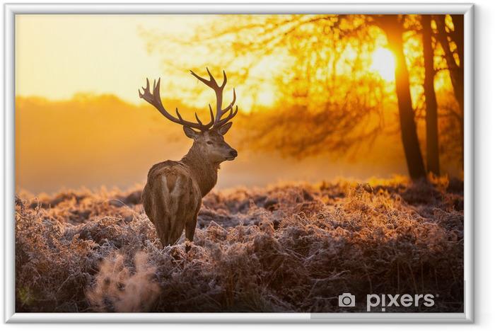 Plakát v rámu Red Deer v ranní Slunce. - Styly