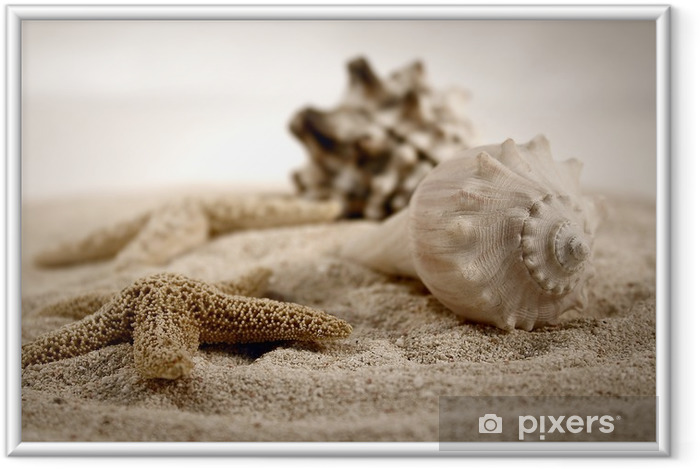 Plakat w ramie Muszle na piasku - iStaging