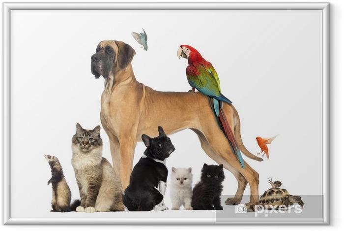 Poster en cadre Group of pets - Dog, cat, bird, reptile, rabbit - Mammifères