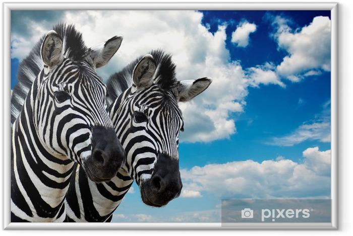 Póster Enmarcado Zebra par - Temas