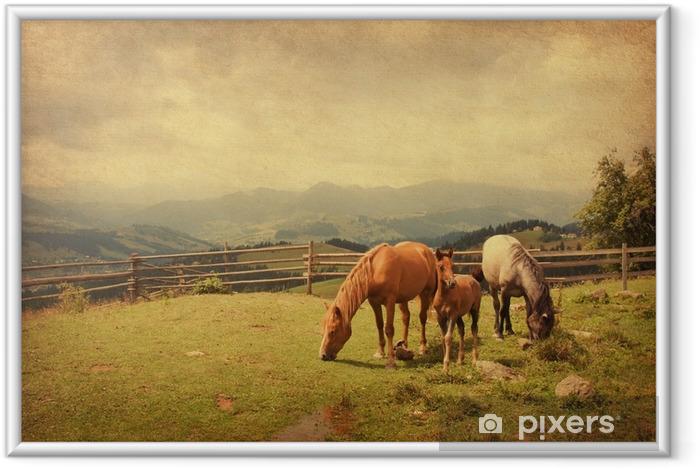 Innrammet plakat To hester og føll i eng. papir tekstur. - Dyr