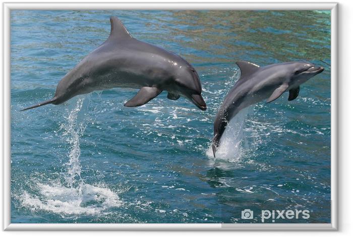 Pullonveja delfiinejä hyppäävät ulos vedestä Kehystetty juliste -