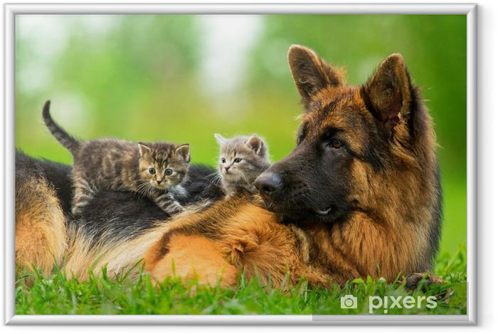 Poster en cadre Chien de berger allemand avec deux petits chatons - Thèmes