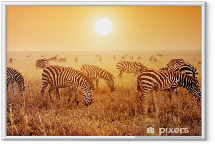 Plakat w ramie Zebry stado na afrykańskiej sawanny o zachodzie słońca. - Tematy