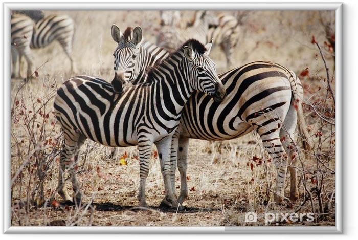 Plakat w ramie Dwie zebry stoi side-by-side - Tematy