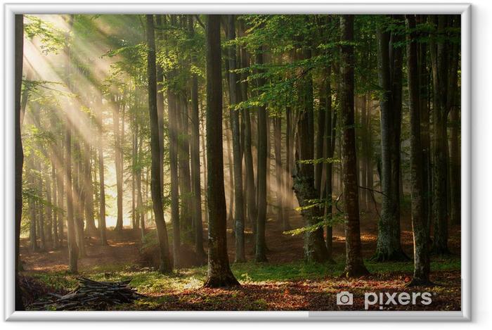 Ingelijste Poster Zonnestralen in een bos - Thema's