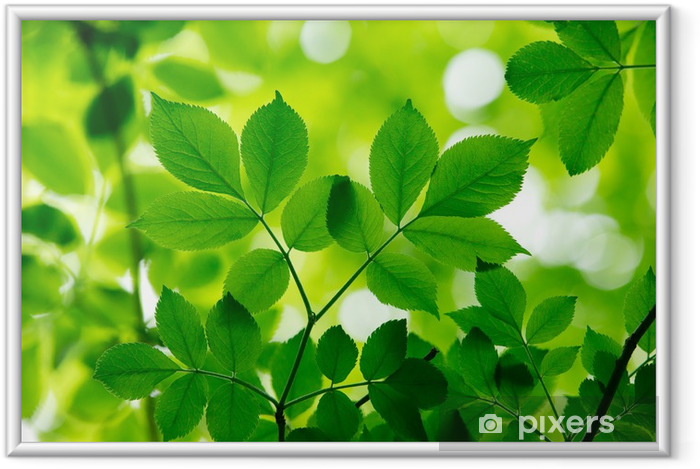 Plakat w ramie Zielone liście - Liście