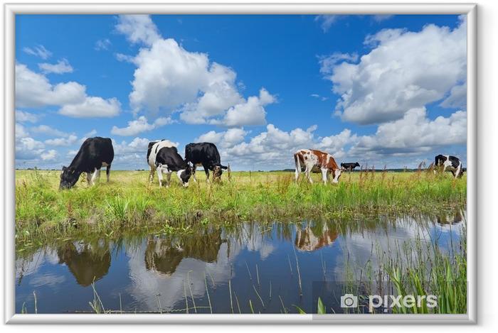 Ingelijste Poster Koeien op de weide door de rivier over de blauwe hemel - Thema's