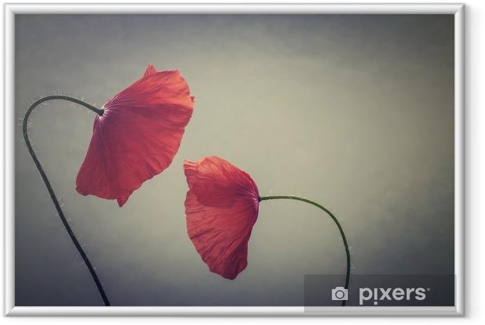 Gerahmtes Poster Kunstmohnblumen - Pflanzen und Blumen