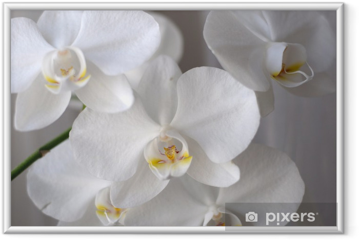 Póster com Moldura Orchid - Temas