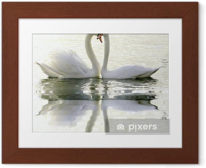 Loving Swans Framed Poster - Swans