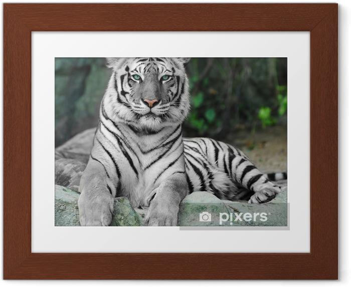 Poster en cadre WHITE TIGER sur un rocher au zoo - iStaging