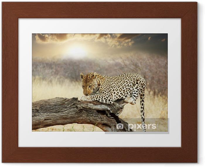 Gerahmtes Poster Leopard - Themen