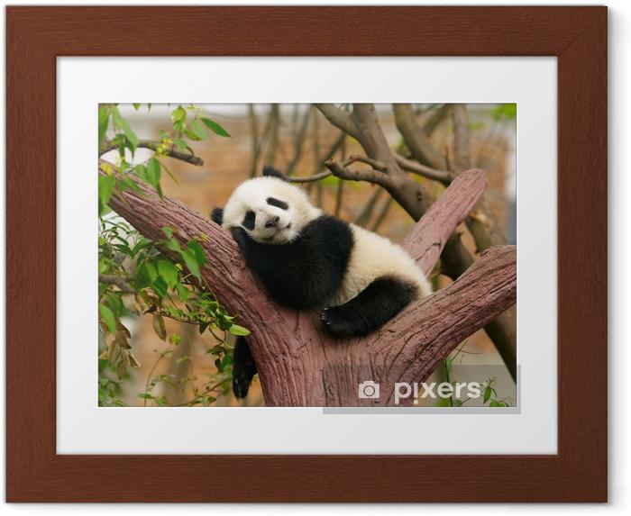 Plakát v rámu Spací pandu dítě - Pandy
