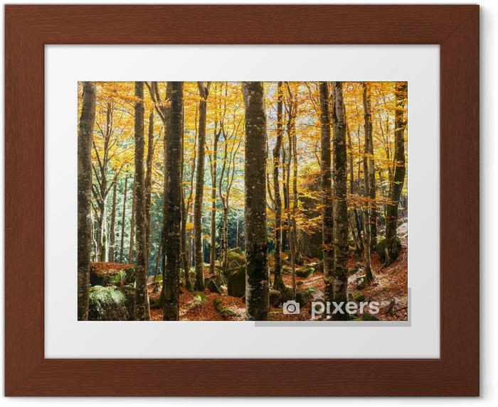 Plakat w ramie Las bukowy jesienią - Przeznaczenia