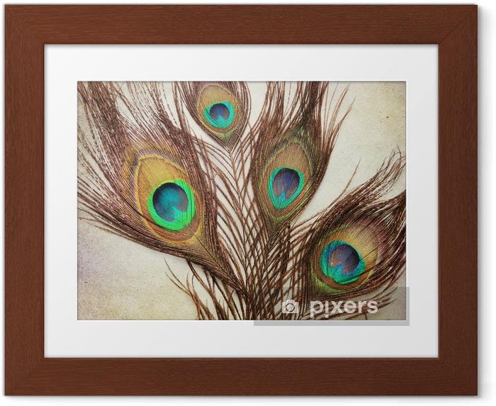 Póster Enmarcado Fondo de la vendimia con plumas de pavo real - Texturas