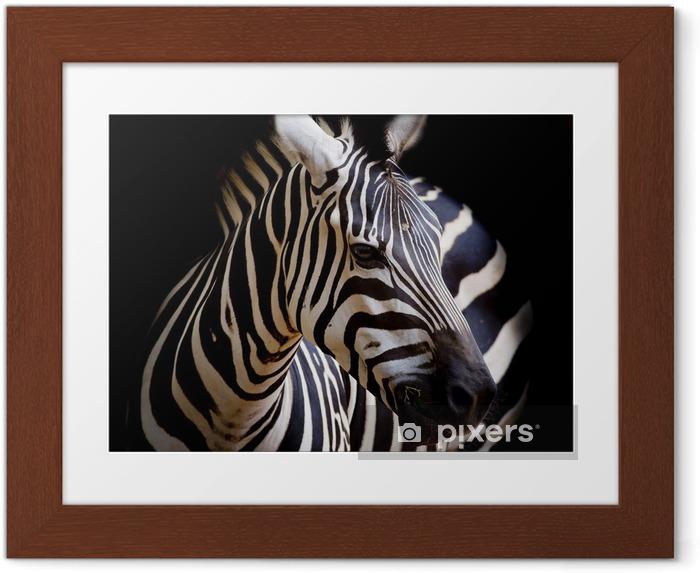 Plakat w ramie Headshot burchell Zebra - Tematy