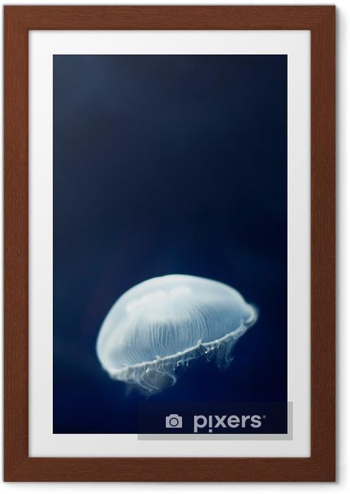 Póster Enmarcado Medusas nadando bajo el agua azul. Sitio para el texto. - Animales marinos