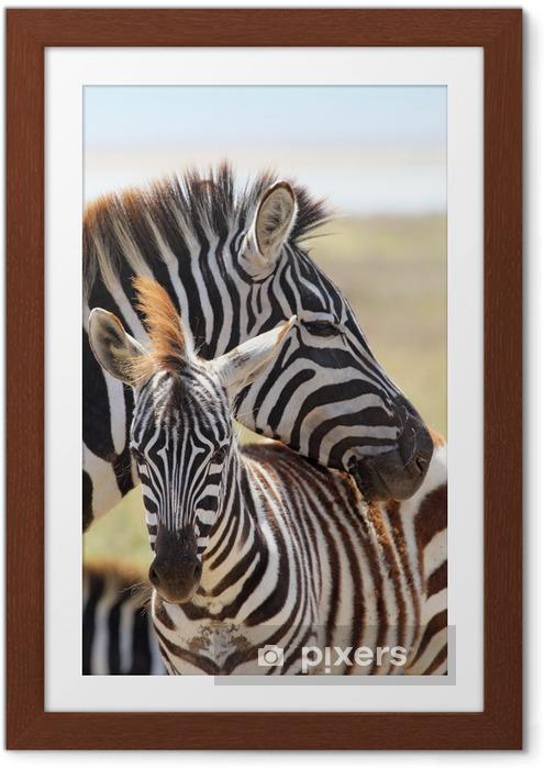 Plakat w ramie Zebra z matką dziecka - Tematy