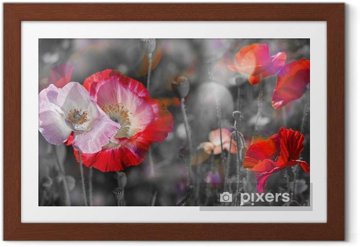 Poster en cadre Summer meadow avec coquelicots rouges - Plantes et fleurs