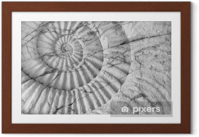 Çerçeveli Poster Ammonite tarih öncesi fosil - Hayvanlar