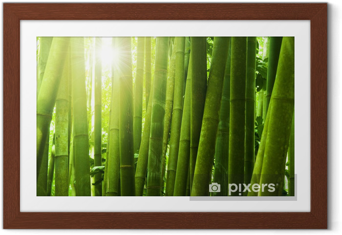 Póster Enmarcado Bamboo forest - Temas