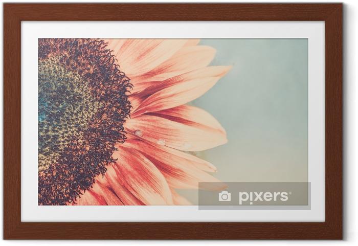 Plakat w ramie Makro strzał kwitnących słonecznik - Rośliny i kwiaty