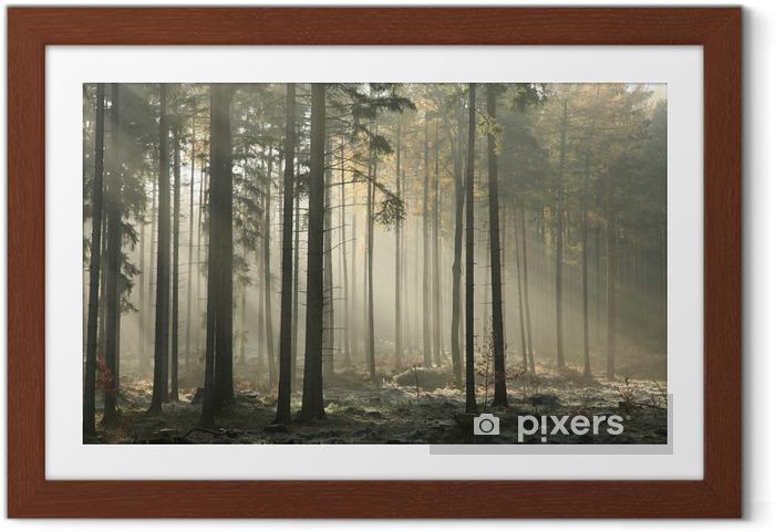 Ingelijste Poster Pittoresk herfst bos op een mistige ochtend van November - iStaging