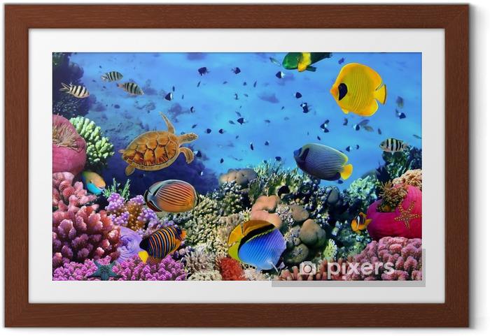 Poster en cadre Photo d'une colonie de corail -